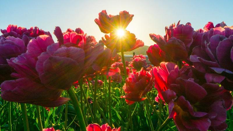 red-flower-fields-1108650.jpg