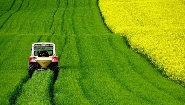 field-of-rapeseeds-4910374_640.jpg