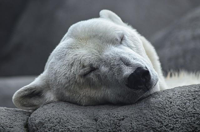 polar-bear-4496437_640.jpg