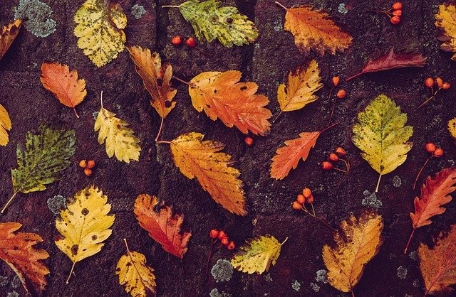 autumn-5704791_640.jpg