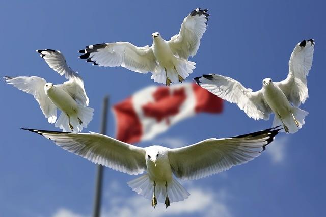 gulls-540791_640.jpg